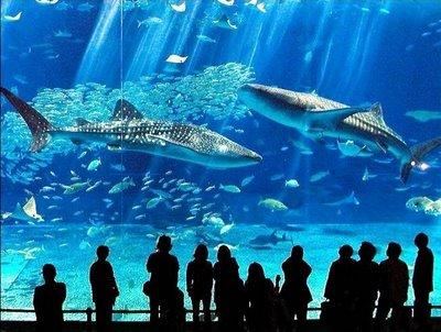 Aquarium Okinawa au Japon