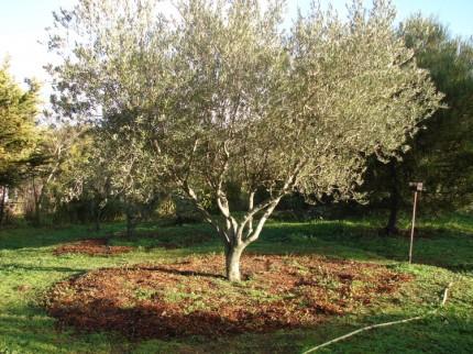 Jacky Dupéty – Le Bois Raméal Fragmenté, pour une agriculture sans eau