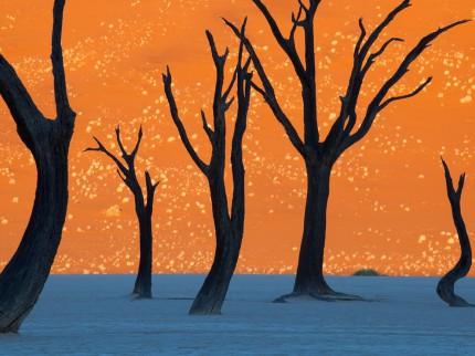 Camel Thorn Trees, photographie ou peinture?