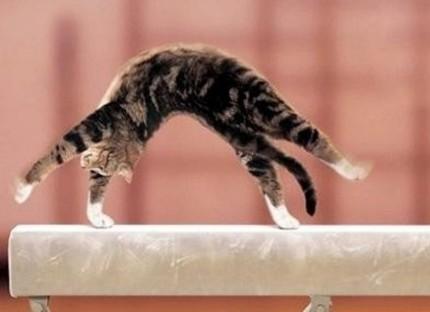Un chat qui ne veut pas se mouiller les pattes