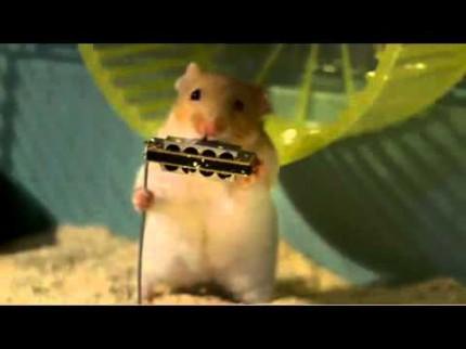 Les Hamsters aiment le jazz