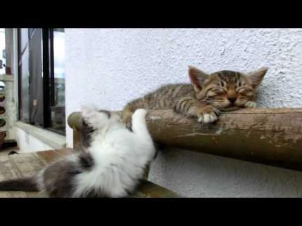 Encore des chats !