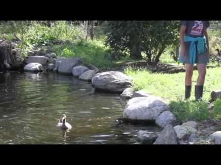 A la découverte de l'eau